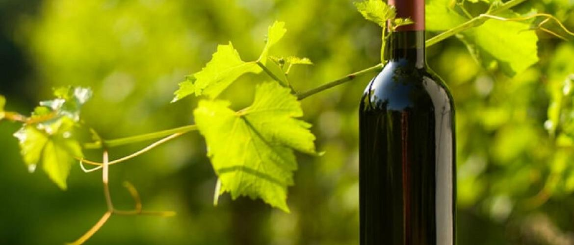 Responsible Drinking and it's Health Benefits